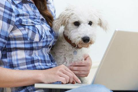 """Telemedicine is helpful for behavior because the veterinarian can see pets in their actual environment, without stressors that come into play when the pet comes to a veterinarian's office,"" said Hilary Jones, V14. Photo: Ingimage"